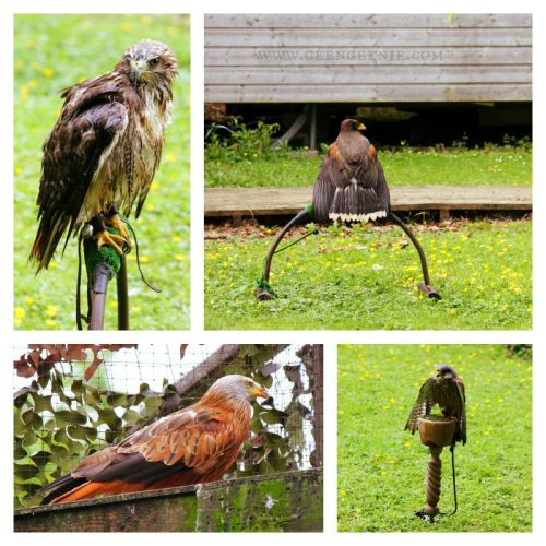 Hawks-Birds of Prey- Bird sanctuary