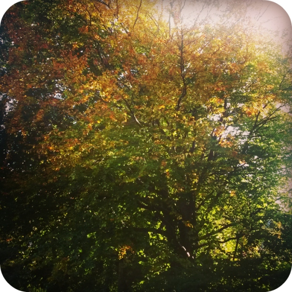 Autumn trees 2015